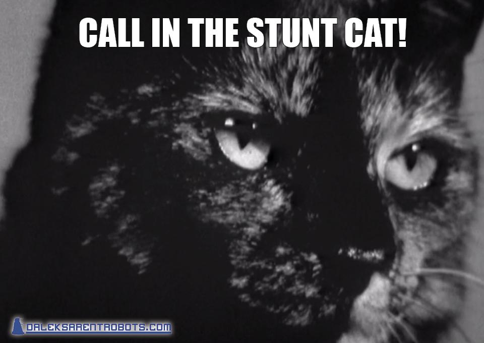 (Image of tortoiseshell cat closeup) Call in the stunt cat!